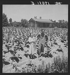 Sharecropper with wife and child in their tobacco field. Note that the tobacco grows up to the front porch. Near Chapel Hill, North Carolina